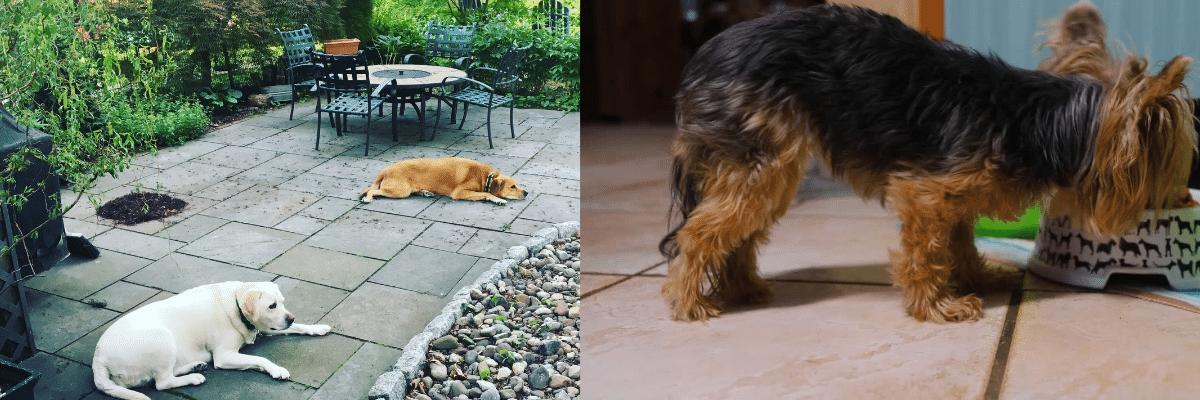 Pet Friendly Patio Cleaner